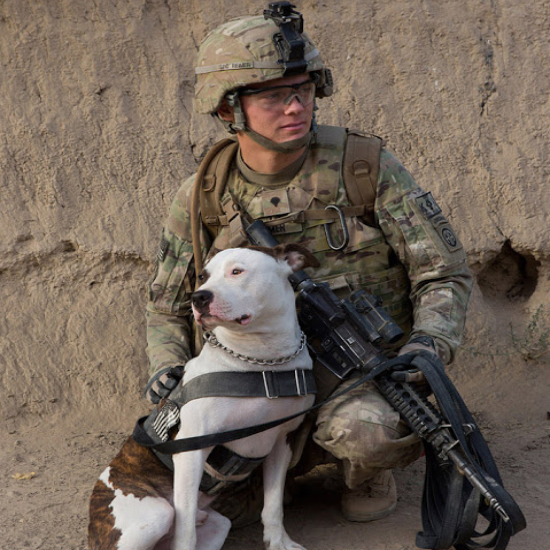 Pit Bulls Not Allowed On Base