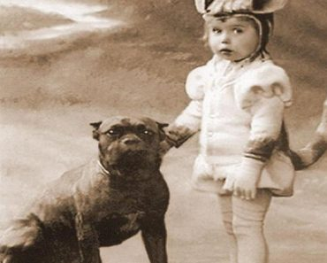 vintage pit bull with children