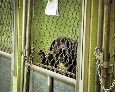 pit bull ban
