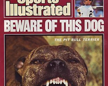 sports illustrated pit bull