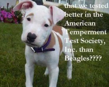 american temperament test society