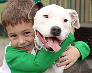 pit bull and children