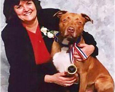 norton hero pit bull