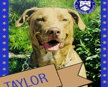 taylor customs dog