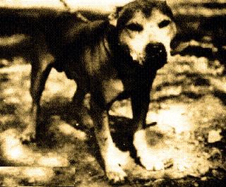 History of Carver Pit Bull Bloodline | Good Pit Bulls