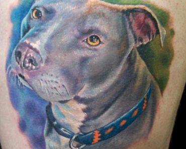 pit bull portrait tattoo