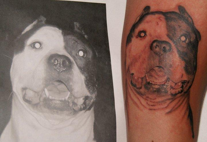 Pit Bull Portrait Tattoos | Good Pit Bulls