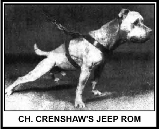 History of Jeep Pit Bull Bloodline | Good Pit Bulls