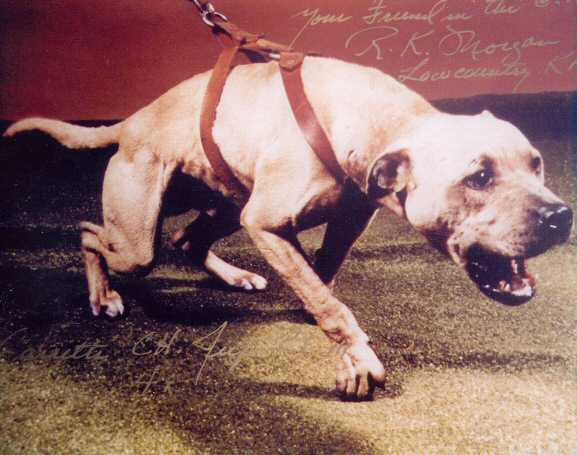 History of Jeep Pit Bull Bloodline | Good Pit Bulls