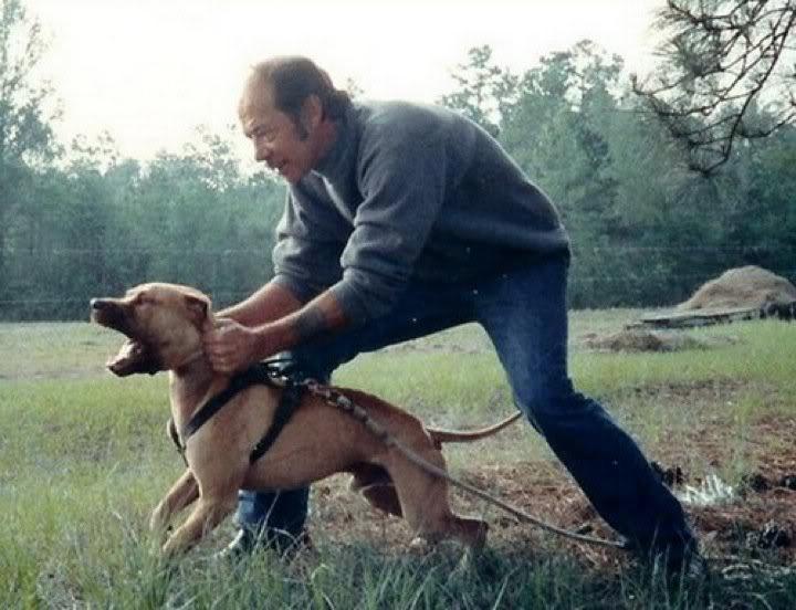 History of Sorrells Pit Bull Bloodline | Good Pit Bulls