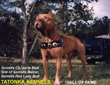tatonka pit bull sorrells uncle bud