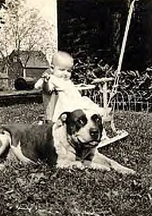 Vintage Pictures Of Pitbulls And Babies Good Pit Bulls