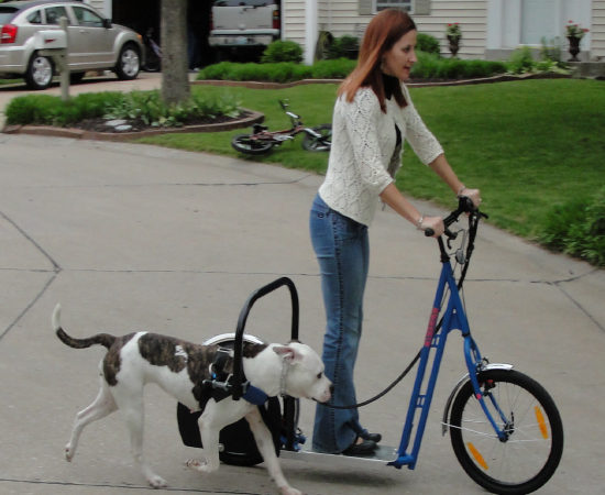 dog Powered Scooters | Good Pit Bulls