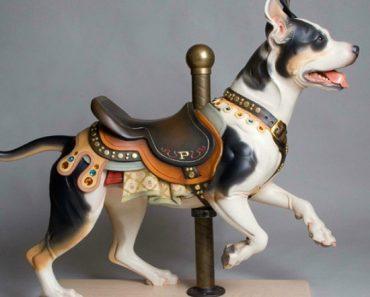 pitbull carousel