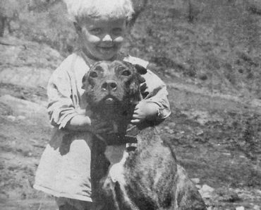 vintage pitbull and child