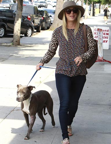 kaley cuoco sweeting pit bull