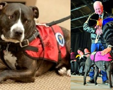 Cletus the Service Pit Bull Receives Degree