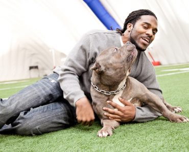 Torrey Smith pit bull