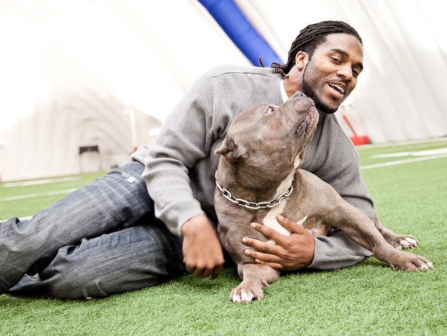 Torrey Smith pit bull