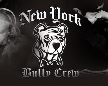 New York Bully Crew