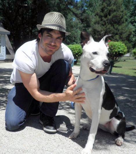 Ian Somerhalder pitbull