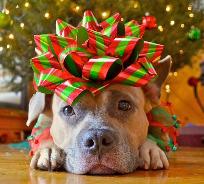 dogs aren't gifts