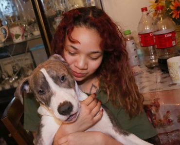 hero pit bull puppy